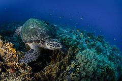 DSC_4129 (bajo_el_mar) Tags: 2018 marrojo underwater fotosub