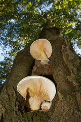 Fungi (jon lees) Tags: fungi tree woodland forest rot ecology decay recycling bracket