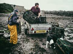 All Are Crabbing (Bone Setter) Tags: stbrideshaven pembrokeshire crabbing men fishermen