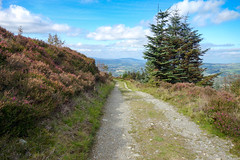Cloughmore Trail (Eskling) Tags: cloughmore stone codown mourne mountains heather track northern ireland path paths caminhos