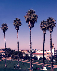 Dolores Park palm trees dusty sunset vintage effect (Aqua and Coral Imagery) Tags: dolorespark sanfrancisco nature landscape inspo effect filter pink blue palmtrees sky above sunset