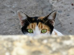 Kot (maciey24) Tags: kot zwierzę cat animal pet hiding eyes oczy