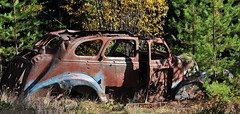While traveling in the bush i came across this old car (Out-of-Doors Photos in Coldstream B.C.) Tags: while traveling bush across old car