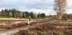 haarlerbergloop 10 km (20)