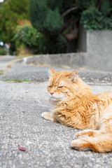 256/365 cat nap