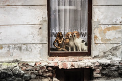 real twins (Behni88) Tags: dog dogs hund hunde chien hound pies hundt wuff hau wau window fenster szyba okno scheibe glass fenetre wand haus house hus masion dom sciana wall statue statuetka prawdziwa real twins zwillinge bliznaki echt egypt egipt walkby unterwegs wdrodze