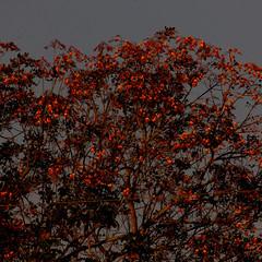 Groundbreaking nature (Neo-noir) Tags: october tree flower america plants flora naturaleza