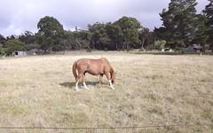 35 FINNIGAN LANE, Torrington NSW