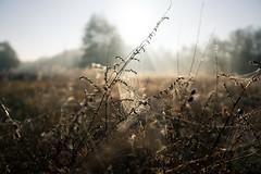 Bosch (24 of 32) (VarsAbove) Tags: kampinos kpn kampinoski park narodowy fog mist mgła morning sunrise dawn wschód polska poland łoś moose sony sonya7 a7ii coffe milkyway