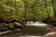 Ricketts Glen (chmptr) Tags: rickettsglen nature paysage eau landscape creek ruisseau water waterfall fall colors automne