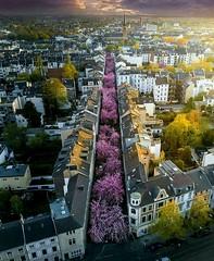 Violet Street Bonn, Germany (katalaynet) Tags: follow happy me fun photooftheday beautiful love friends