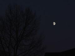 Dark Side of the Bright Moon (Golden Ginkgo) Tags: waxinggibbous moon nightphotography