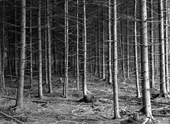 the forest through the trees (john grzinich) Tags: 11 2018 6x45 82021c april d76 expiredfilm kodakd76 mamiya645e orwonp22 blackwhite forest ishootfilm filmisnotdead