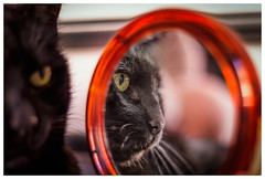 In the mirror (Pepenera) Tags: mirror cat cats gatto gato gatti black