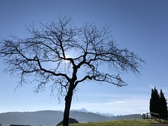 The tree (Sibeal's world) Tags: nature landscape tegersche degersheim saentis säntis mountains fields rays trees