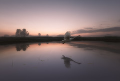 The soul descends (petrisalonen) Tags: soul descends lake finland suomi järvi photoshop visual reflection swan water mirror haze fog mist nature luonto art light white landscape sunset sunrise sky clouds atmosphere fi