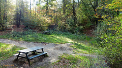 Autumn delight (2) - Leemkuil Rhenen. (Cajaflez) Tags: bos bomen bench bank light licht autumn autun herbst herfst leemkuil rhenen
