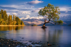 #thatwanakatree V2 (Nicholas Chewy) Tags: wanaka tree mitakon 50mm sony a7r2 a7rii a7r mk2 new zealand mountains lake sunrise sunset epic light mountain water sky forest serene landscape