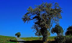 Route de campagne (Diegojack) Tags: vaud suisse senarclens d500 nikon nikonpassion route campagne arbres paysages groupenuagesetciel