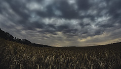 IMG_0877 (Daladys) Tags: outdoor canon eos 600d clouds sky corn maize field fisheye landscape samyang 8mm