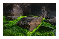 Pembrokeshire Green & Black (paulypaulpaul1) Tags: rockpool igneous pembrokeshire coastline detail wales tamron1024 pentaxk5 vivid greenblack green greeeeeeeen abstract abstraction
