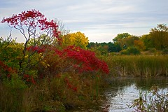 Fall colors (kirsten.eide) Tags: wisconsin landscape nature trees colors fall autumn