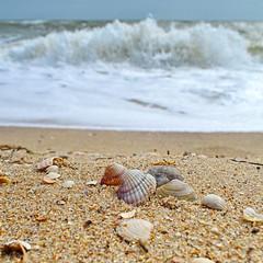 34616436 (aniaerm) Tags: sea coastalfinds sand