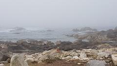 Camino Portugues de la Costa (landeicgn) Tags: nebel nieblas fog küste shore costa rocks felsen camino santiago jakobsweg james way walk