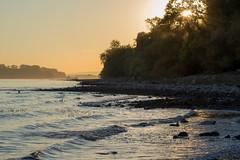 Down by the river (Marilely) Tags: riverbank sunset sonnenuntergang sunlight water waves shore ufer sonnenlicht wasser river fluss rhein rhine nature landscape landschaft rheingau