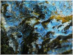 :: MicroCosmic ([JBR]) Tags: abstrait abstract abstracto bleu azul blue macro closeup pentax 100mm jbrphotography jbr 5 55 555 2018 gard lasalle salendrinque nature naturaleza natural light luz lumiere daylight