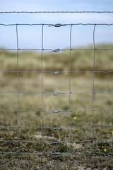 Fenced (Wouter de Bruijn) Tags: fujifilm xt2 fujinonxf56mmf12r fence mesh metal wire lines line bokeh depthoffield shallow nature westhove mantelingen oostkapelle veere walcheren zeeland nederland netherlands holland dutch outdoor