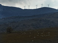 wind turbines and sheeps (panoskaralis) Tags: windturbines turbines wind energy windenergy mountains mountainview mountainside sheeps nature lesvos lesvosisland mytilene greece greek hellas hellenic outdoor landscape greekisland greeknature nikoncoolpixb700 nikon nikonb700 rainyday skyclouds