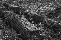 Fuzzy Logs (Modkuse) Tags: logs autumn woods forest monochrome bw blackandwhite nikon nikondslr nikond700 nikon70210mmf4056nikkor leaves