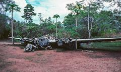 Wrecked US P-38G Lightning at Vilu Open-Air Museum (Serendigity) Tags: wreck p38 american solomonislands pacificocean us secondworldwar relict lightning aircraft guadalcanal wwii rusting guadalcanalprovince sb kodachrome 35mm slide film