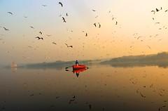 Yamuna Ghat, Delhi (irrfanazam) Tags: flikrtravelaward photographer morning yellow red inexplore travel streetphotographer photography water india delhi river margate birds yamunaghat