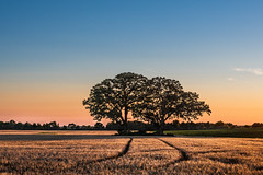 G'Night you two.jpg (NetAgra) Tags: trees summer oregon sunset sky nightfall july warm oaks clouds