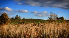 Autumn Fields (Mateusz Majewski) Tags: nature fiellds sky clouds country scenery fall poland