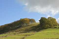Hilltop (Tony Tooth) Tags: nikon d7100 sigma 1750mm hill hilltop wood woodland trees wildboarclough cheshire countryside landscape england