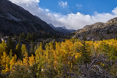 Autumn come alive in the mountains (AgarwalArun) Tags: sony a7m2 sonyilce7m2 landscape scenic nature views easternsierra bishopca bishopcreek lakes leaves autumn fallfoliage mountains inyonationalforest