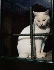 """COLD FREEDOM"" .  #PHOTOMOVIL #photography #nature #fauna #animales #window #nature #expressión #imagination #felino #gato #cat #huawei #saffsunset #november #galifornia #galicia #vilagarciadearousa #pontevedra (saffsunset) Tags: november nature gato saffsunset fauna imagination felino pontevedra photomovil expressión galicia vilagarciadearousa animales huawei galifornia cat window photography"