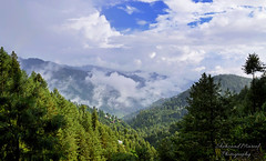 Nathiagali (Shehzaad Maroof Khan) Tags: nathiagali hill hillstation mountains trees forest mist fog clouds rain sun sky jungle village town countryside countrylandscape woods abbottabad khyberpakhtunkhwa kpk pakistan travelpakistan beautifulpakistan nature