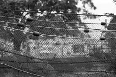 Garn til tørre (holtelars) Tags: asahi pentax spotmatic spotmaticii spii m42 supertakumar takumar 50mm f14 film 35mm analog analogue ilford fp4 ilfordfp4 100iso d76 bw blackandwhite monochrome filmphotography filmforever ishootfilm larsholte homeprocessing jobo atl1500 nivå denmark danmark havn marina fishingnets