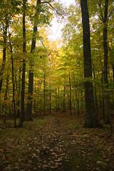 IMG_6317 (sjj62) Tags: fishcreekwi doorcountywi fall autumn woods doorcounty fishcreek 40d