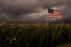 Corn crop with American Flag (Jim Corwin's PhotoStream) Tags: agriculture americanflag americana pacificnorthwest agrarian agriculturalfield agriculturefield backroads closeup corn corncrop cornfield countryside crop cropland cultivatedlands cultivation farm farmfresh farmscene farming farmland farmscape field forebodingclouds harvest harvesting heartland homestead horizontal localattractions nature nobody outdoors pattern peaceful photography pickyourown quiet road rural ruralscene scenery sightseeing storm stormclouds stormy stormyweather tradition tranquil workingfarm