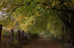 Gruß an Johanna ;-) (LENS.ART Photographie) Tags: wald herbst weg path autumn fall woods trees bäume landschaft landscape nikon d7200 norddeutschland niedersachsen