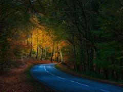 Road in Hesede forest (ibjfoto) Tags: autumcolor autumn autumntrees danmark denmark efterårsfarver hesedeforest hesedeskov ibjensen ibjfoto natur zealand efterår landscape landskab natura outdoor trees