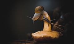 Autumn (armandocapochiani) Tags: autumn nature mushrooms snails salento puglia taranto italia naturalistica animols flora fauma dark romantic mood food