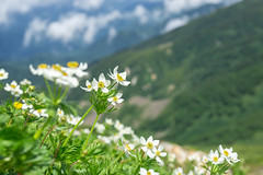 Hakusan-Ichige (bamboo_sasa) Tags: 白馬岳 北アルプス 後立山連峰 百名山 白馬大雪渓 白馬村 長野 信州 日本 登山 shiroumadake northern alps hakuba snowy valley nagano shinshu japan mountain trekking