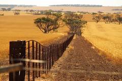 Fenceline via Port Clinton, Yorke Peninsula, South Australia (Red Nomad OZ) Tags: australia southaustralia portclinton yorkepeninsula farm agriculture field rural country countryside landscape paddock crop