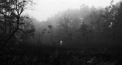 Alone in the forest (gormjarl) Tags: bronseplassen høvåg lillesand norway shamanism